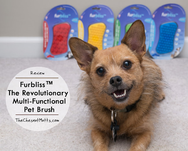 Review: Furbliss™ - The Revolutionary Multi-Functional Pet Brush