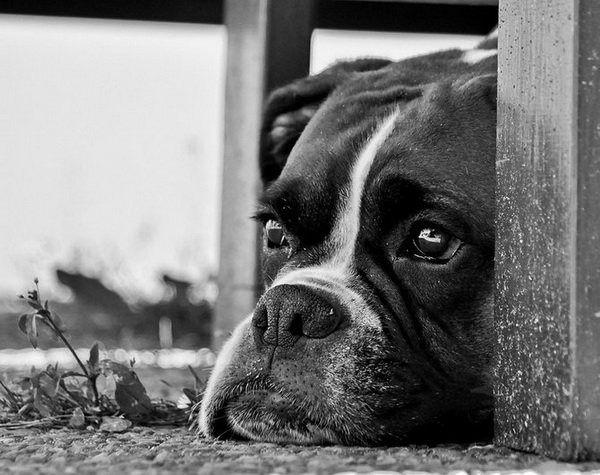 retratos de cachorros.