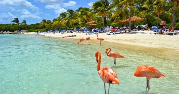 Explore The Beauty Of Caribbean: Aruba Island In Caribbean Sea