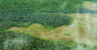 Amazon rainforest (Photo Credit: Conservation International) Click to Enlarge.