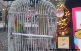 Kisah Pemula Pertama kali Kontes Lovebird
