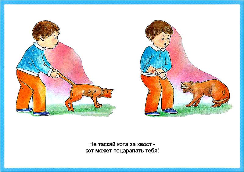 Правила поведения с животными для детей в картинках, днем