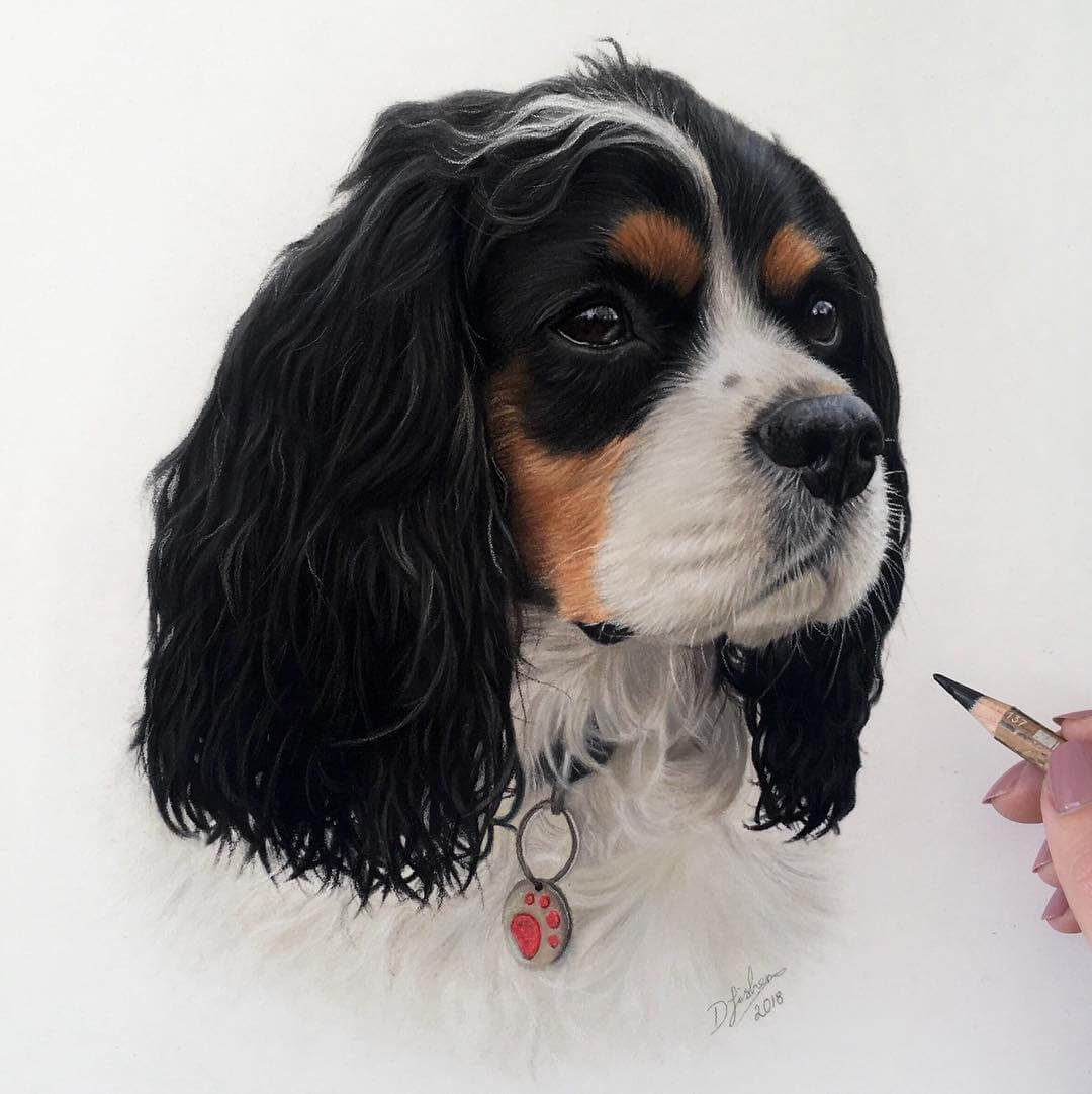 12-Cavalier-King-Charles-Danielle-Fisher-Realistic-Animal-Portrait-Pastel-Drawings-www-designstack-co