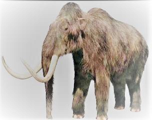 Mammoth WoollyJenis Hewan Besar yang Menakutkan Hidup di Zaman Pra-sejarah