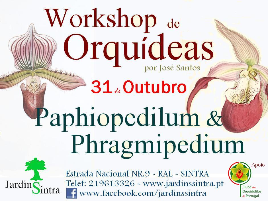 workshop orqu deas sapatinho no jardins sintra clube orquidofilos portugal. Black Bedroom Furniture Sets. Home Design Ideas