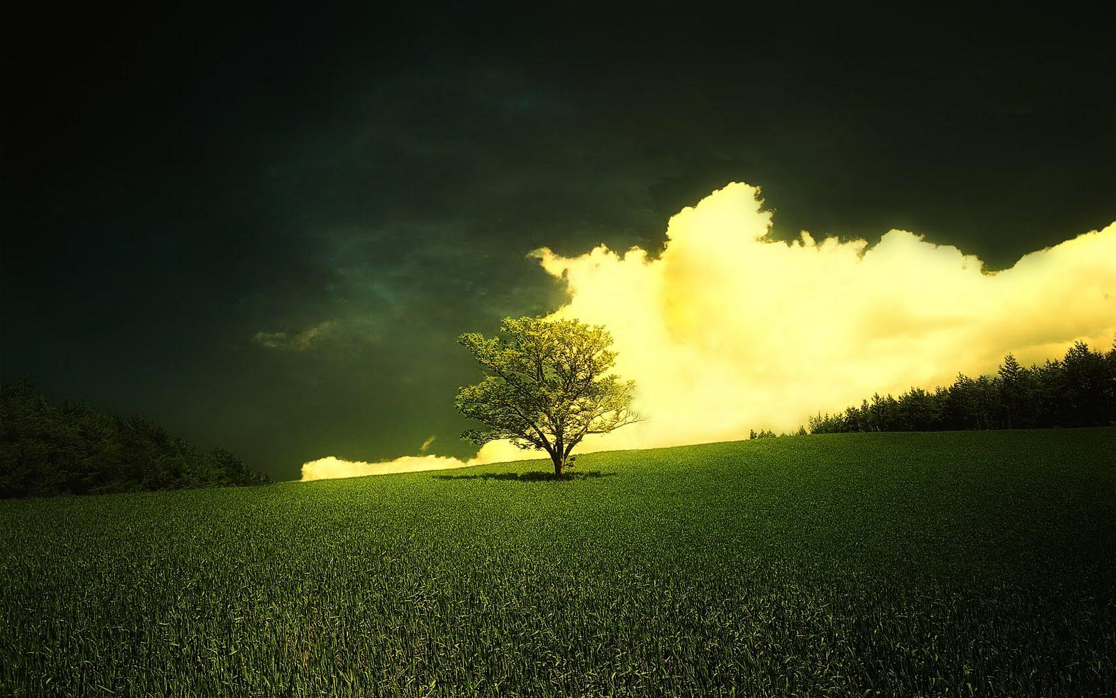 45 Beautiful Widescreen Wallpapers: Peartreedesigns: Beautiful Natural Morning Widescreen