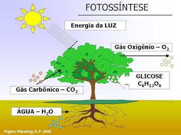 A mídia convencional esta criando noticias falsas sobre o dióxido de carbono (CO2)