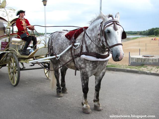 Конь в яблоках - Великий Новгород