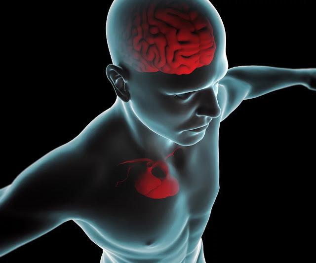 l'alluminio-passa-dal-cuore-e-va-al-cervello