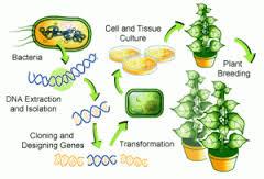 Pemindahan Materi Genetik pada Bakteri