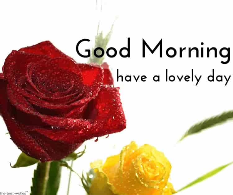 images of good morning images with roses