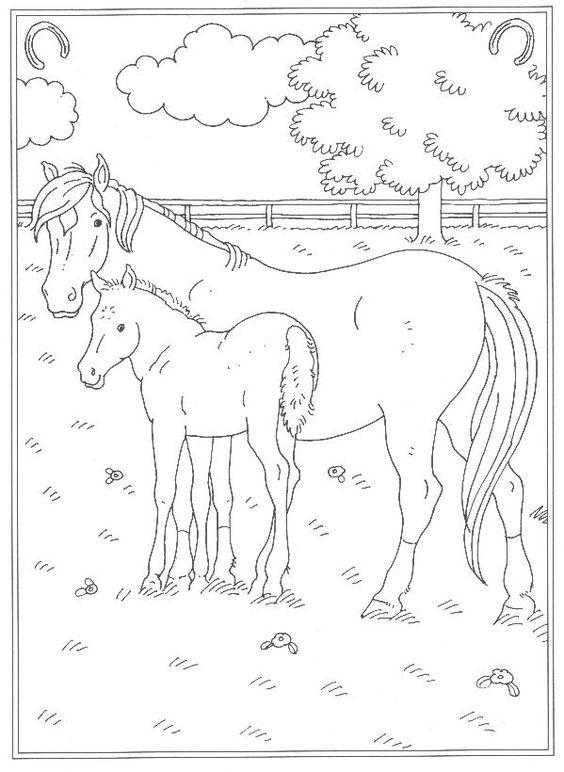 Tranh tô màu ngựa bố và ngựa con