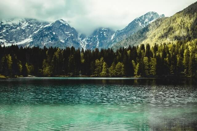 Photography of Fir Trees Near Lake HD Copyright Free Image