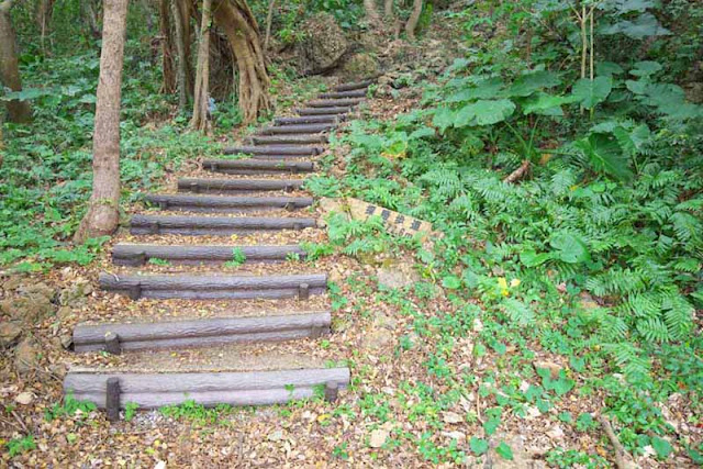 hill, forest, trees, steps, trail, Okinawa