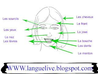 صفات الوجه بالفرنسية - le visage en arab