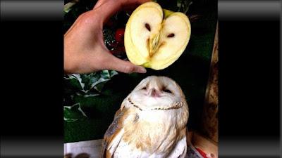 potongan buah apel hijau seperti wajah burung hantu