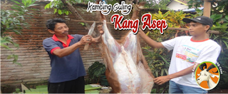 Jual Kambing Guling di Lembang Bandung
