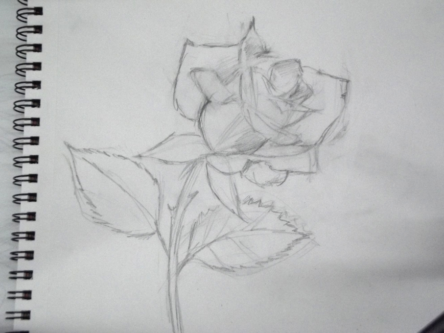 El Taller de Miguel Angel Cmo dibujar una rosa