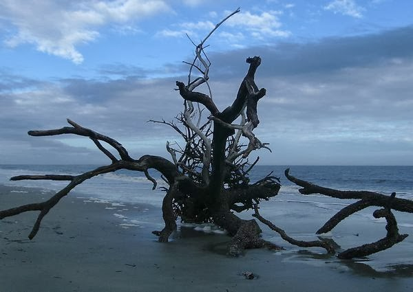 hunting island state park by dear miss mermaid