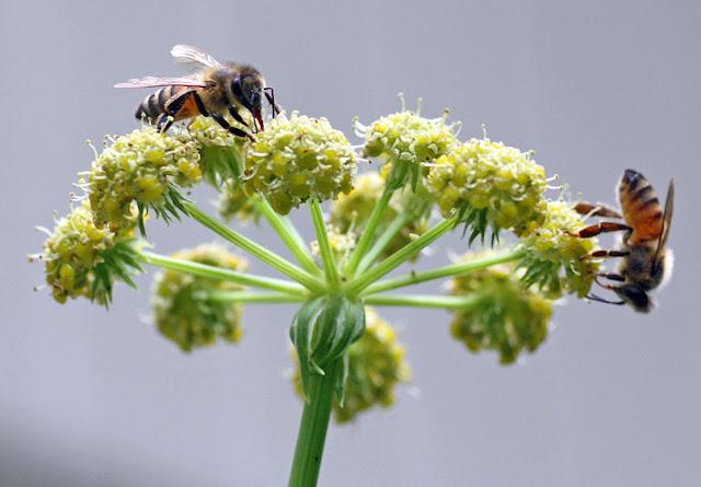 Πωλείται μέλι στην Κόρινθο