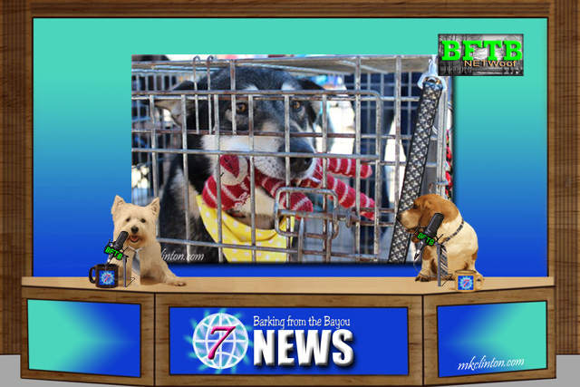 BFTB NETWoof News on Houston's Animal Shelter