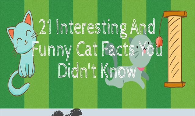 21 Interesting and Funny Cat Facts You Didn't Know