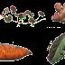 Hỏi đáp sinh học: Câu hỏi sinh học 11 có đáp án - Phần sinh sản vô tính ở thực vật