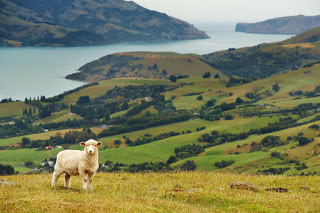 Top Family-Friendly Locations on NZ's South Island