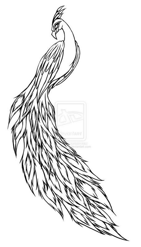 Resultado de imagem para pavão desenho realista