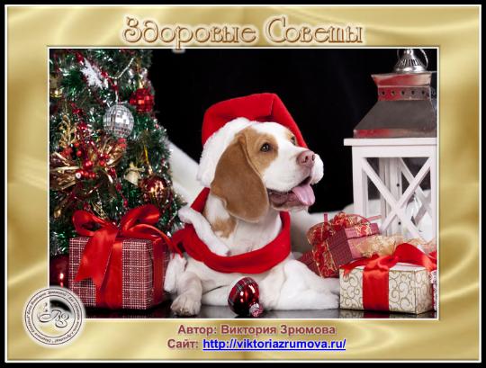 2018 год  по восточному календарю – Год Желтой Земляной Собаки!