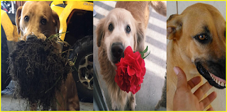 10+ Times Pets Brought Their Owners The Most Unexpected Gifts Of each animal.