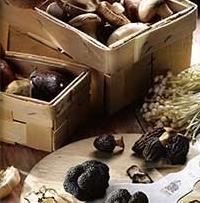 Άγρια μανιτάρια που τρώγονται στην Ελλάδα