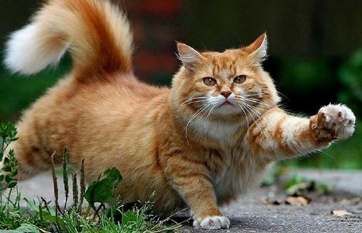 Hayoo, Kenapa Kucing Akan Selalu Menoleh Jika di Panggil Puss, Ini looh Jawabanya