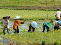 Bagaimana Perkembangan Pertanian di Indonesia Saat Ini?