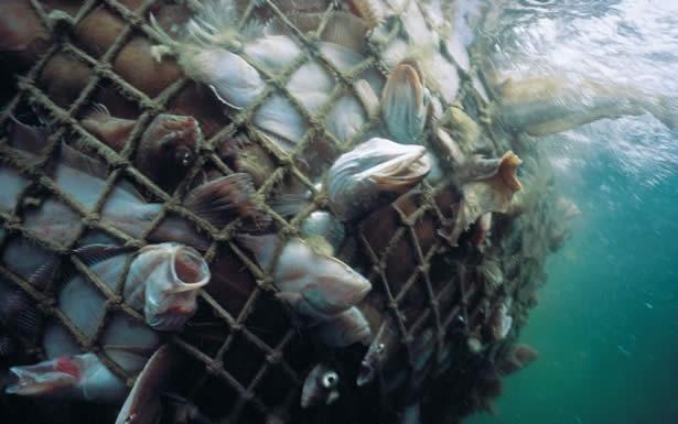 Resultado de imagen de red llena de peces