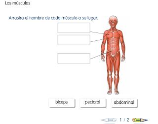 http://primerodecarlos.com/SEGUNDO_PRIMARIA/SANTILLANA/Libro_Media_Santillana_c_del_medio_segundo/data/ES/RECURSOS_GENERALES/PDI/01/01/03/010103.swf