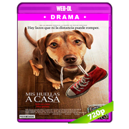 Mis huellas a casa (2019) WEB-DL 720p Audio Dual Latino-Ingles