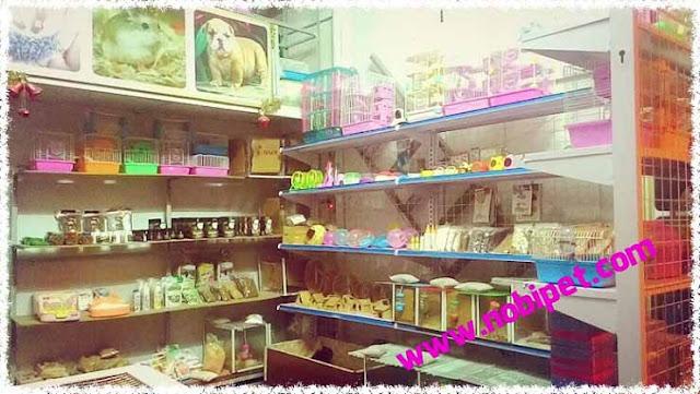 shop-hamster-mua-ban-chuot-canh-gia-re-lon-nhat-viet-nam
