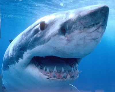 Como regenerar os dentes? Os tubarões podem ter a resposta