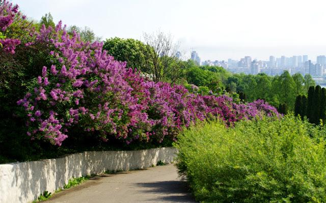 Kyiv botanical garden