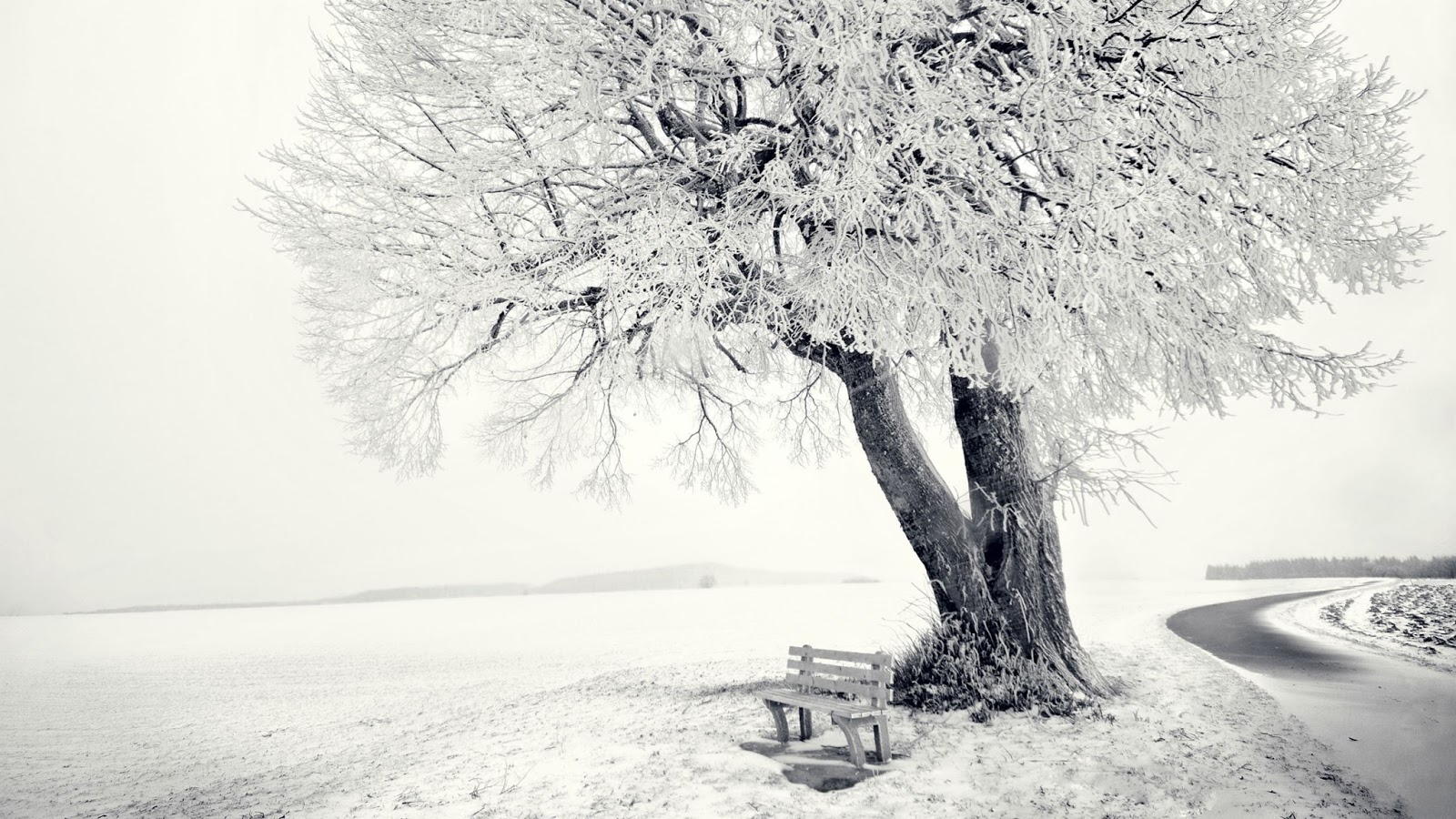 Snow tree Wallpapers