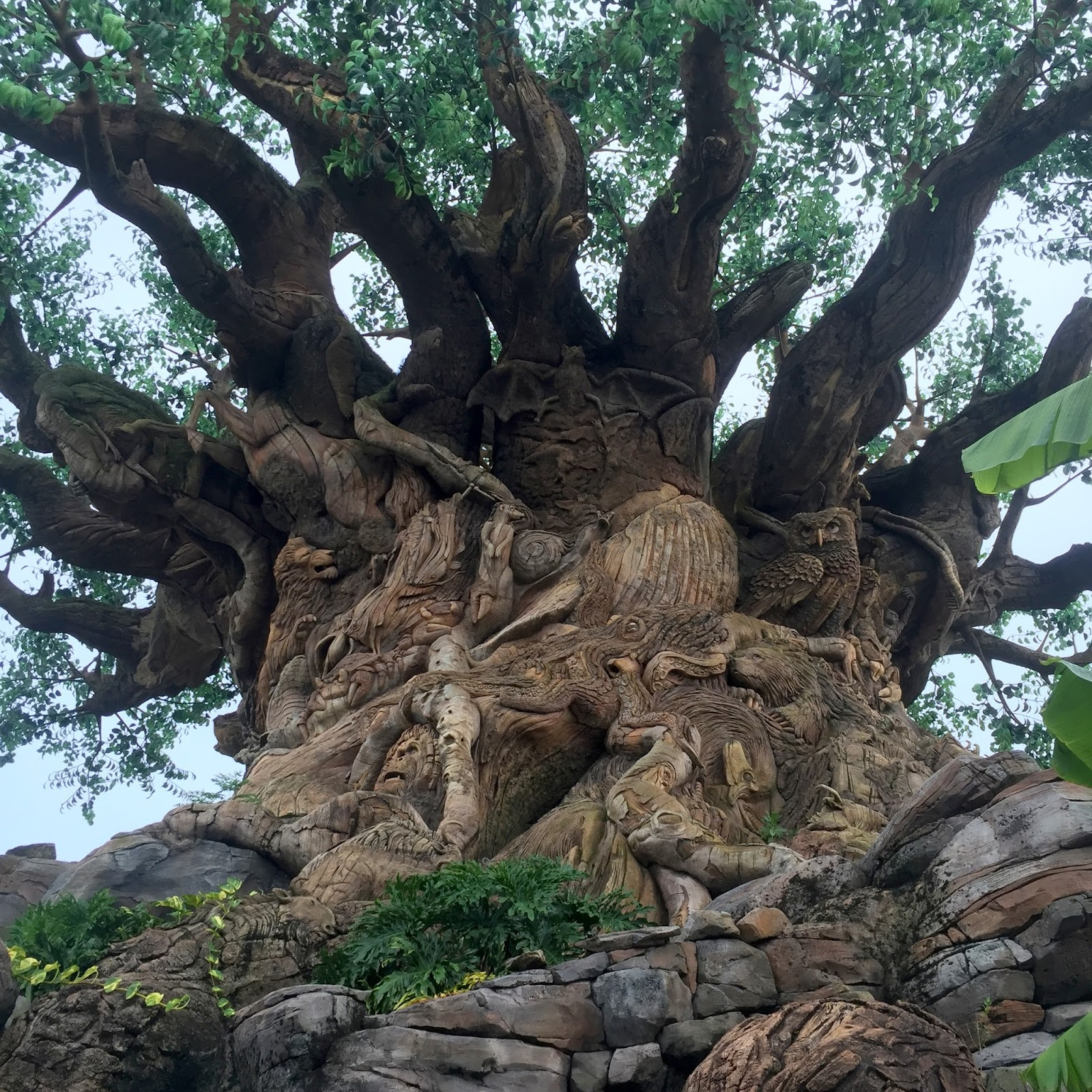 My Paisley World All About Disney S Animal Kingdom Tree