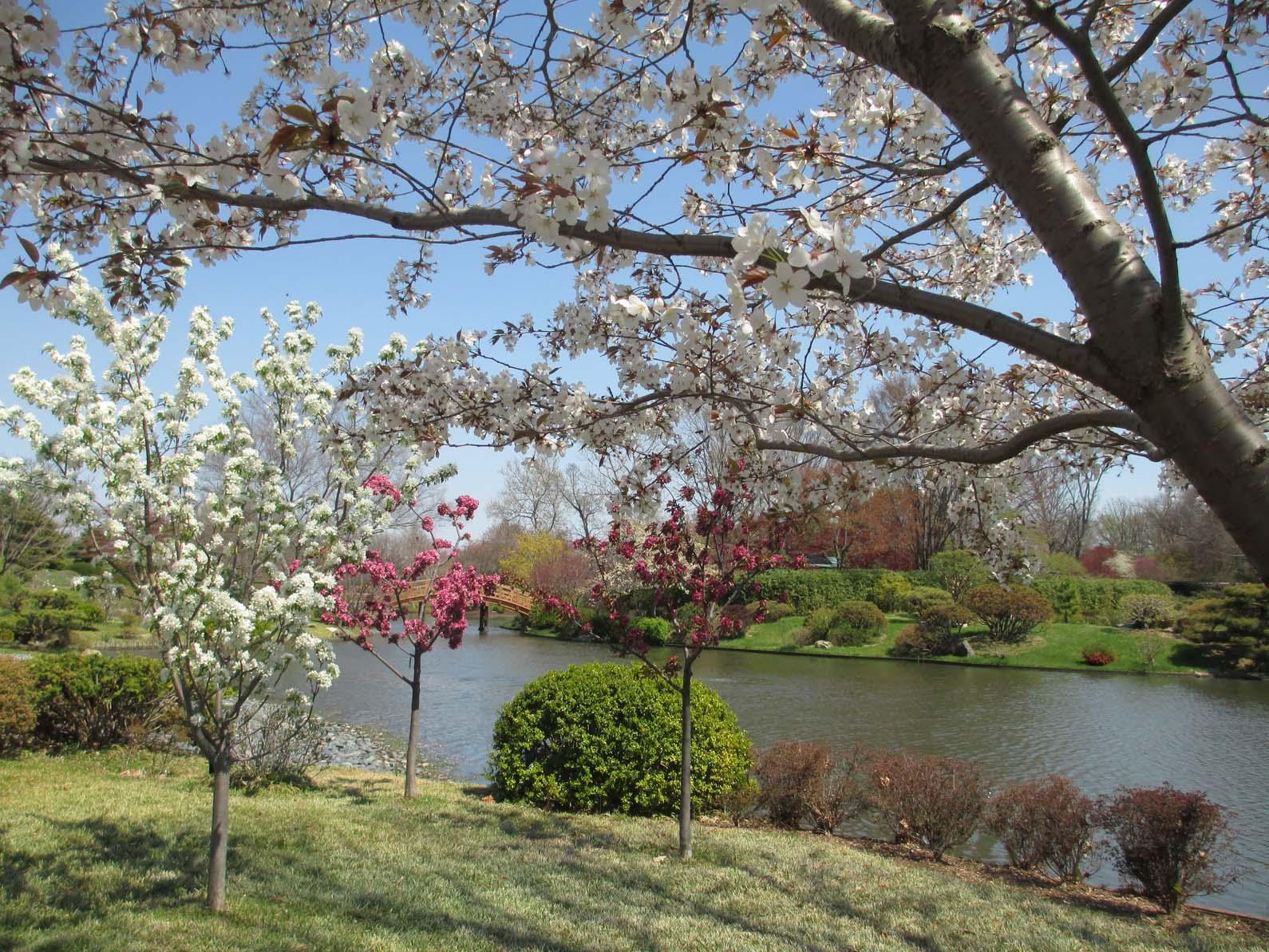 Garden Fancy: Early April Scenes