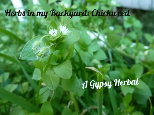 Chickweed Round-up