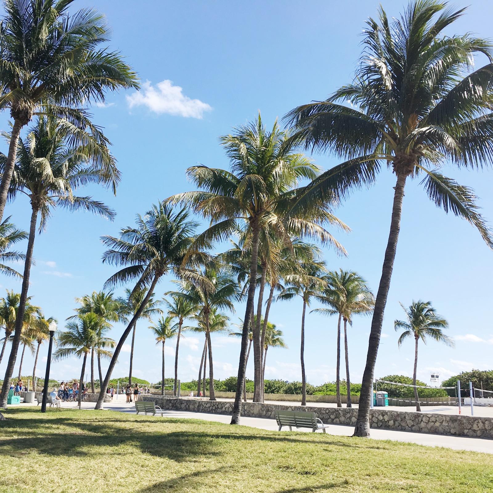 Honeymoon Miami