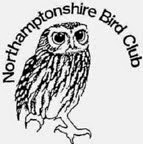 NBC Little Owl logo