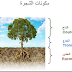 المحاضرة 7 : وحدة البيوجغرافيا - مكونات الشجرة
