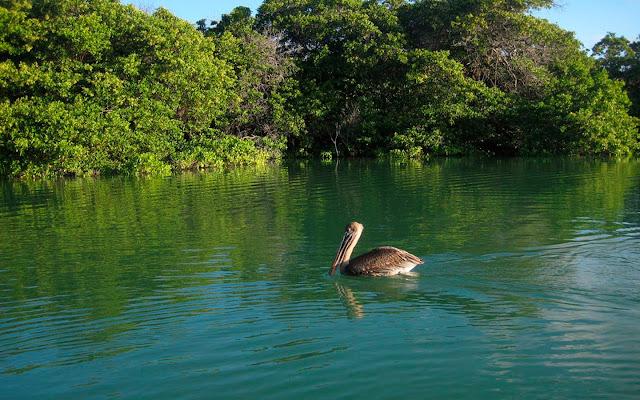 Black Turtle Cove - Caleta Tortuga Negra