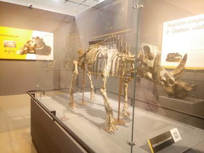 fosil dinosaurus