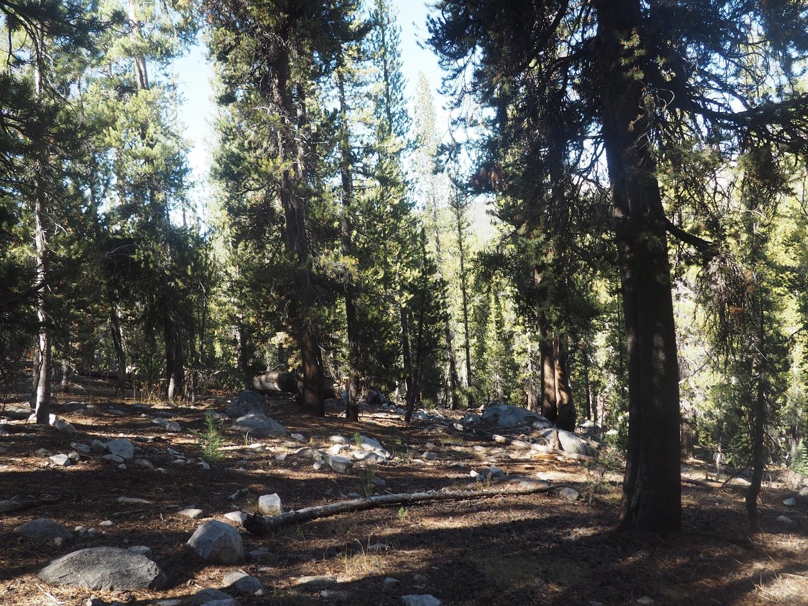 Trees in Yosemite National Park, California
